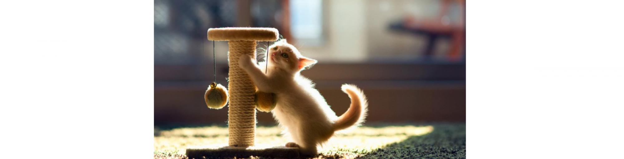Сухой корм для кошек по разумной цене Купить сухой корм